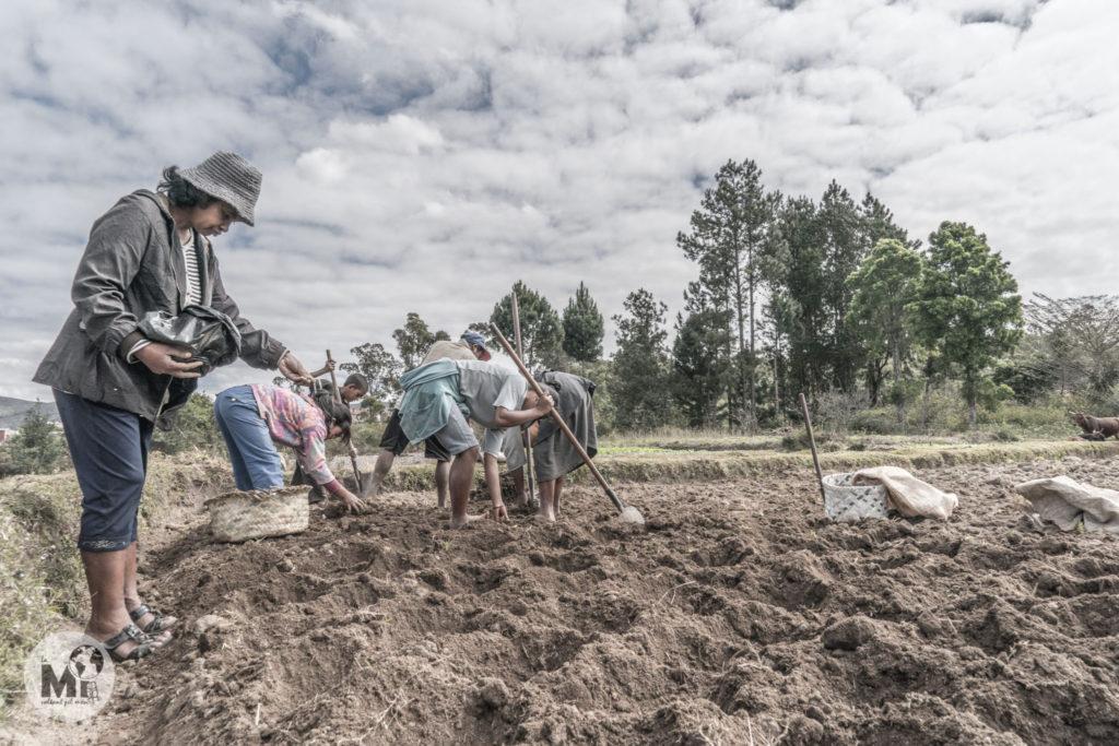 La família sencera s'encarrega de la sembra dels camps