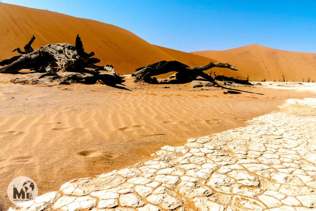 Les restes d'una acàcia dessecada fa 900 amys als peus del la gran Duna Big Daddy