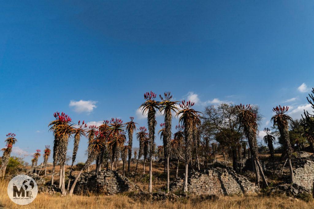 Moltes de les restes estan derruides i la vegetació s'ha obert pas